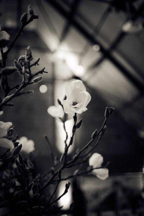 Bloemen lichtfabriek Haarlem