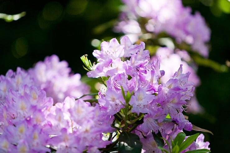bloemen bij Domaine d'Heerstaayen